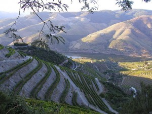 The Douro Valley — Home of port wine.