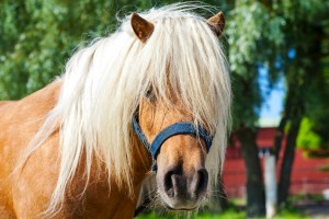 A free Fire-Rider short story: Woman Warriors of the North. Erysa's favorite pony.